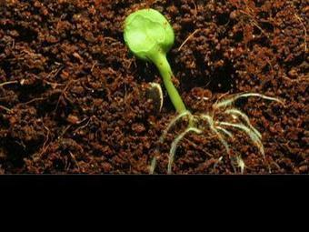 Assignment Discovery: Germination of a Seed : HowStuffWorks | Biology in Laos | Scoop.it