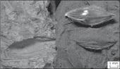The Archaeobotanist: Earlier sorghum in Sudan | Nubia | Scoop.it