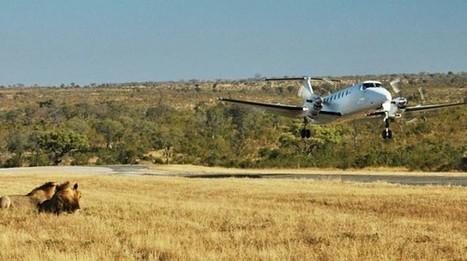 Airlink launch direct flights to Kruger National Park | Kruger & African Wildlife | Scoop.it