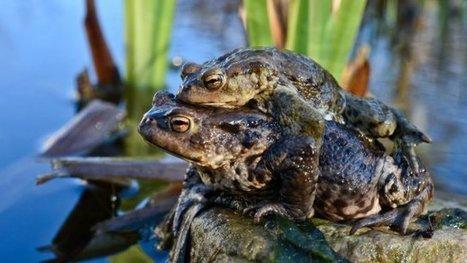 Des hommes pour sauver les grenouilles – environnement - France 3 Alsace | Biodiversité | Scoop.it
