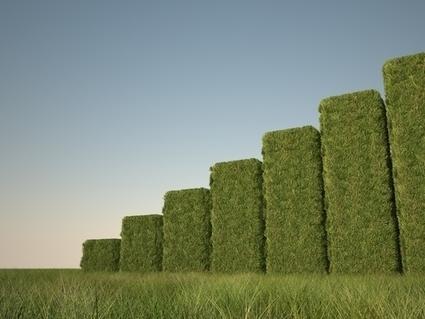 7 Sustainability Trends to Watch for in 2013 | Sustainable Business Forum | Développement durable et efficacité énergétique | Scoop.it