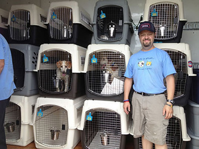 Brittany Rescue Consortium saves over 100 dogs in Louisiana | Pet News | Scoop.it