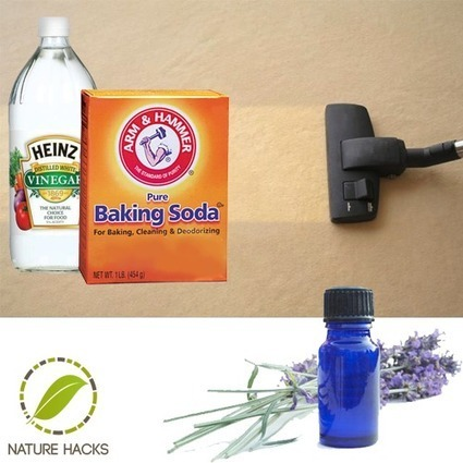 How To Naturally Clean Your Carpet   Aromatherapy plus   Scoop.it