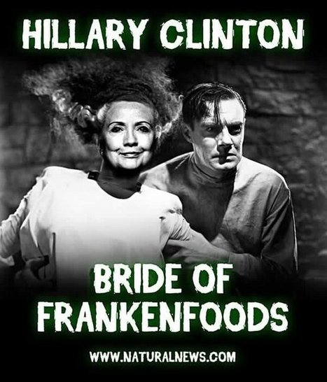 #Monsanto puppet #Hillary #Clinton Pushes #GMO Agenda, Hires Monsanto Lobbyist, Takes Huge Dollars ... | Messenger for mother Earth | Scoop.it