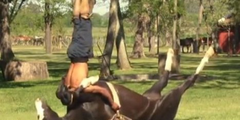 What In The Hell Is Going On Here? | Equestrian | Scoop.it