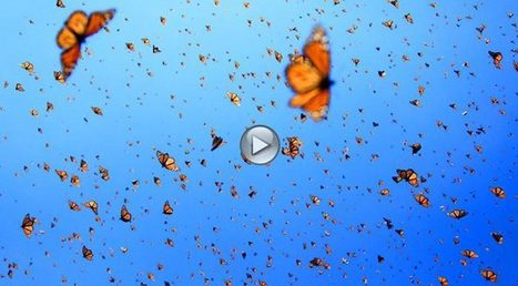 Flight of the Butterflies in 3D Home Page   Flight of the Butterflies   Annie Haven   Haven Brand   Scoop.it
