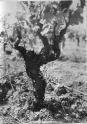 Toponymie - De la vigne | Map@Print | Scoop.it