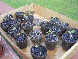 Modern Mia Gardening   Annie Haven   Haven Brand   Scoop.it