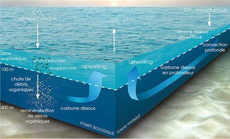 Le saviez-vous ? L'océan est une super-pompe à carbone - National Geographic | Développement durable et efficacité énergétique | Scoop.it