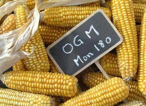 OGM : 9 Etats africains cogitent sur un plan de communication | Questions de développement ... | Scoop.it