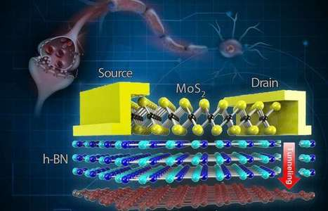 Stretchable, flexible, reliable memory device inspired by the brain | Neuroscience Research | Scoop.it