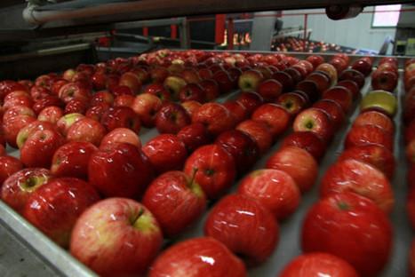 Que pèse la pomme en Vallée du Loir | Le fruit de l'actualité | Scoop.it