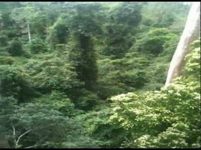 Ghana, Nigeria, and Kenya – the rainforest at Kakum national park ... | Forests Unlimited | Scoop.it