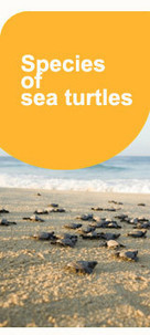 Major Impacts of Climate Change on Sea Turtles | Effects of Global Warming on Sea Turtles | Scoop.it