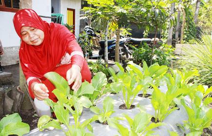 Empowering women through organic farming - Jakarta Post | Karmic Pantry | Scoop.it
