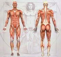 Anatomy Diagram of Human Body - Animated Muscle Anatomy and Physiology | Health and Wellness | Scoop.it
