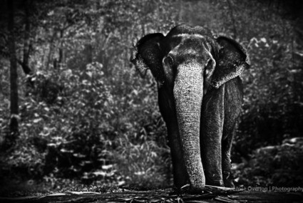 the sahyadris | A photographic journey through the Western Ghats | Gun Violence | Scoop.it