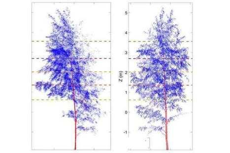 Même les arbres dorment pendant la nuit | Actualité Houssenia Writing | Bureau de curiosités | Scoop.it
