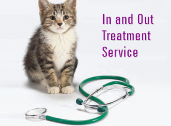 Affordable Cat and Dog Hospital, Clinic Aurora, Naperville IL   Affordable Cat and Dog Hospital   Scoop.it