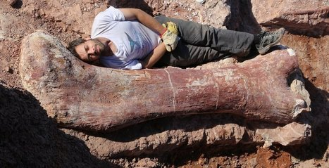 'Biggest dinosaur ever' discovered | Skylarkers | Scoop.it