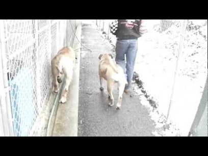 Send Jumba and Imani Home to Die   Nature Animals humankind   Scoop.it