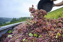 Bordeaux, France's largest fine-wine region, sees rain, hail destroy grape crop   Wines and Terroirs   Scoop.it