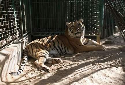 Les images terribles d'un zoo à l'abandon dans la bande de Gaza | Des infos sur notre planète : ecologie , biodiversité | Scoop.it