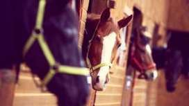 Horses can communicate with us - scientists - BBC News | Biologie in de klas | Scoop.it