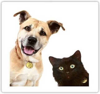 Pet Protector | Care for your Pets | Scoop.it