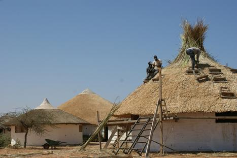 Le typha, ressource locale: défis sanitaire, écologique, culturel et économique. | Fondation Sylla Caap | Scoop.it