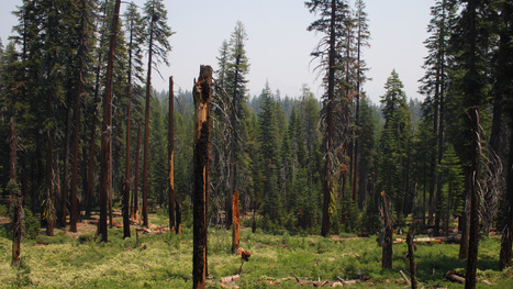 Could wildfires undermine California's grand climate goals? | Sustain Our Earth | Scoop.it