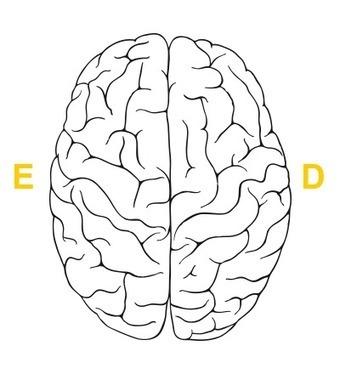 Lado direito do cérebro? Lado esquerdo do cérebro? Faça o teste!   Design_Innovation   Scoop.it