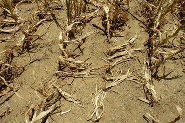 2012, année la plus chaude aux États-Unis   Élément terre   Scoop.it