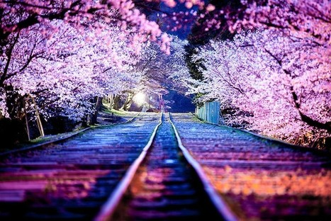 21 Stunning Photos Of The Spring Cherry Blossoms In Japan (It's Happening Right Now!) | Music, Videos, Colours, Natural Health | Scoop.it