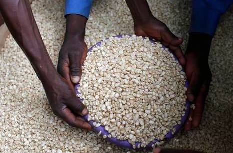 Malawi has most expensive maize in Southern Africa | MAIZE | Scoop.it