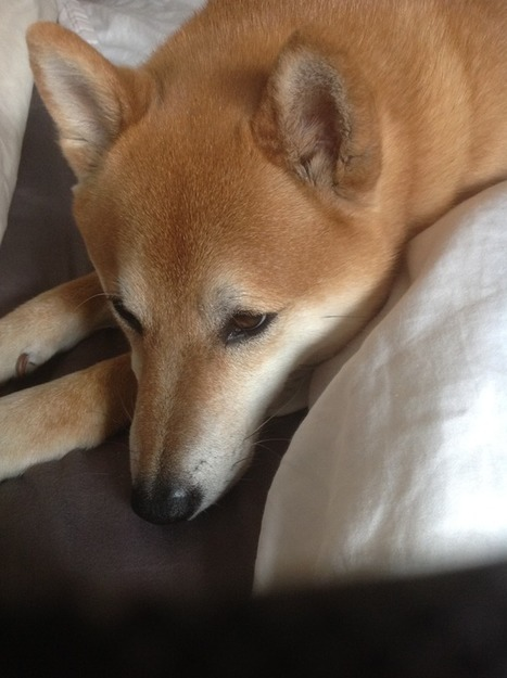 My Dog Has a Great Klout Score | SocialMoMojo Web | Scoop.it