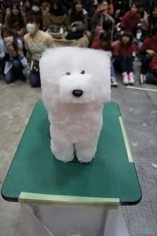 Shaving Dogs Into Cubes Is A New Japanese Craze And We Can't Stop Staring | Cultural Geography | Scoop.it