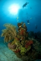 Grace Under Pressure: Dealing with Panic Underwater | All about water, the oceans, environmental issues | Scoop.it