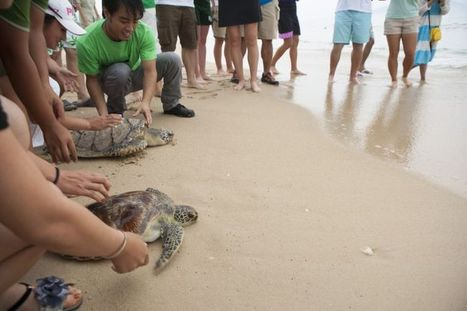Straight from the turtle's mouth | Conservation | The Earth Times | Sea Turtles | Scoop.it