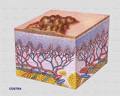 Atlas de dermatología | Herramientas de salud: odontología, dermatología, oftalmología, salud mental y fisiatría | Scoop.it