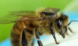 Salvare le api con la tecnologia | PaginaUno - Innovazione | Scoop.it