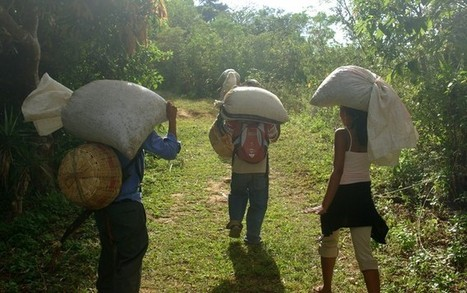 Fair for who? The crisis of Fairtrade for coffee farmers | Belco - coffee universe | Scoop.it