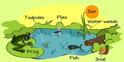 What is an ecosystem? | #Sustainability #nature #gardening | Educación y TIC | Scoop.it