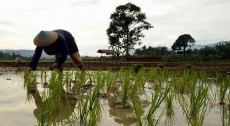 Profesi Petani Mulai Ditinggalkan Masyarakat Asia :: Okezone Economy | DuPont ASEAN | Scoop.it