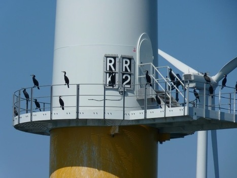 UK: Robin Rigg Offshore Wind Farm Undergoes Maintenance >> Offshore Wind | Subsea O&G | Scoop.it
