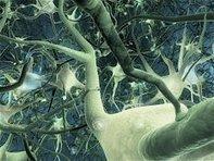 La conscience vue par lesneurosciences   Beyond the cave wall   Scoop.it