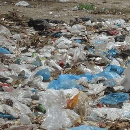 Environmental Impacts of Plastic Bags | Sustainable business expert, waste & recycling, sales & marketing | Scoop.it