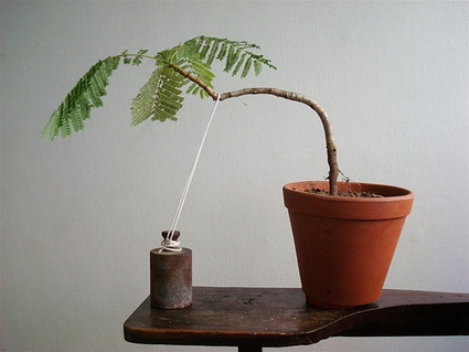 Bonsai Management: How to stunt your employees | Bonsai | Scoop.it