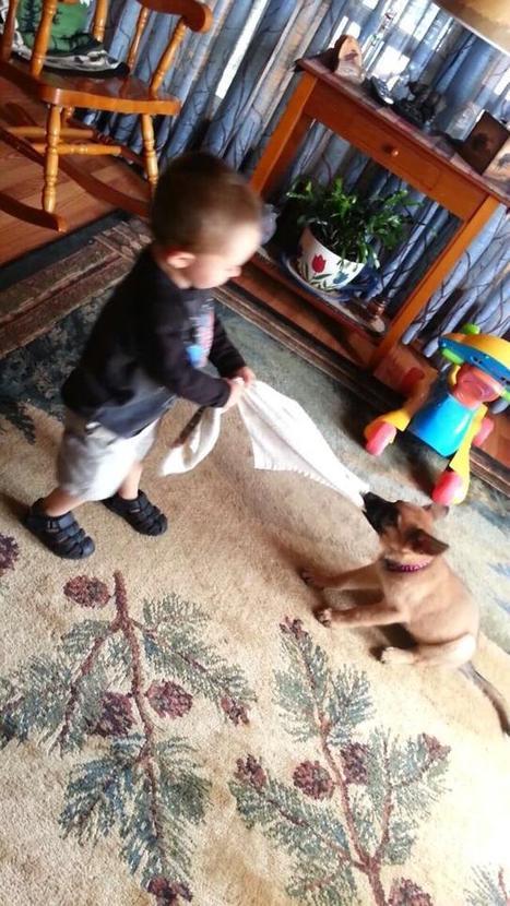 Twitter / FeliciaKrieg: Foxy, among 24 abandoned pups, ...   Northern Puppies Saga   Scoop.it