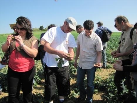 INRA - L'accompagnement de l'innovation en agriculture de conservation   Innovation agriculture   Scoop.it